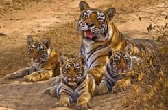 Sundarban-Tours