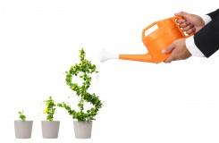 Money-Growth-Photo