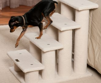 Puppy Steps: Benefits and Tips That You Must Know