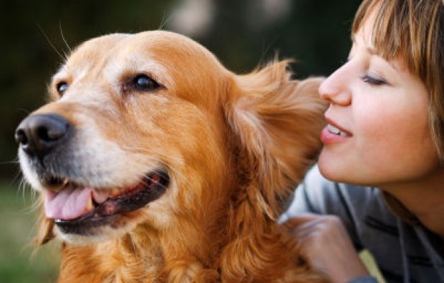 4 Easy Tips To Take Care Of Your Dog
