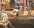 Rodeo Bull Rides Are For Family Entertainment Centre