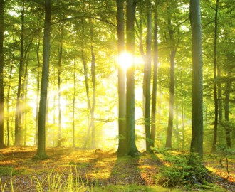How Forests Could Benefit Us?