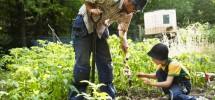 Understanding Soil Quality
