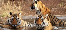 Take A Trip To The Magnificent Environs Of Kanha