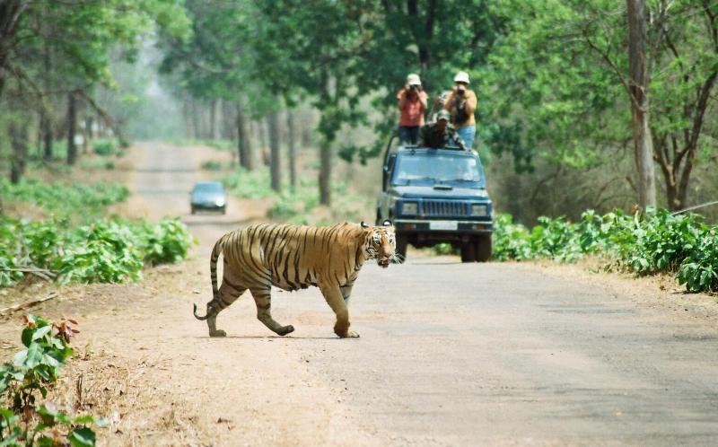Tadoba Tiger Resort and Other Top Unexplored Indian Wildlife Destinations