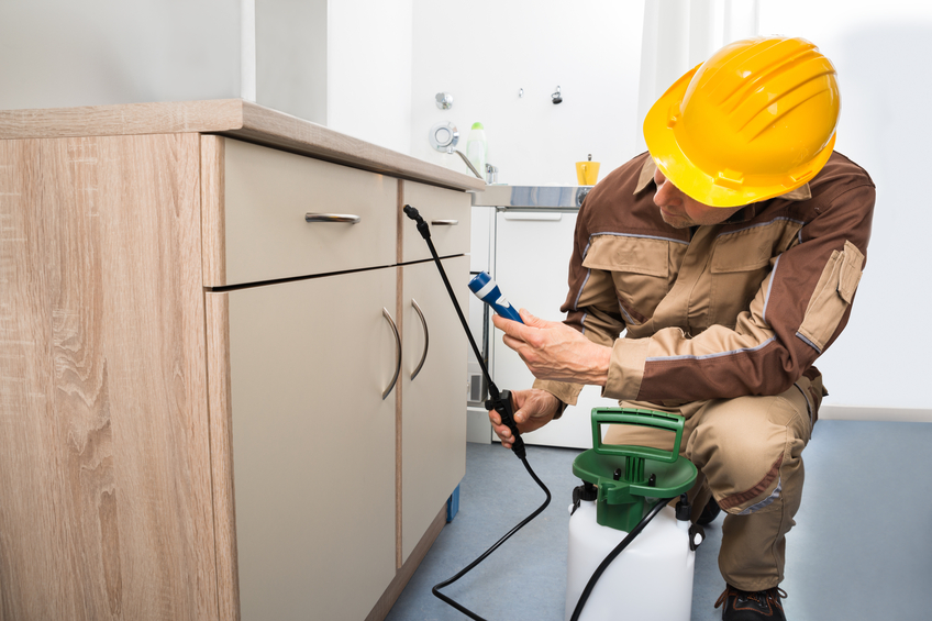 Why Is Pest Control Service A Must To Consider In Brentwood