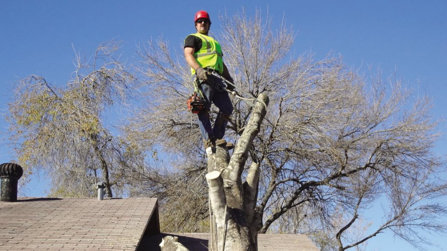 Finding The Right Tree Service Provider