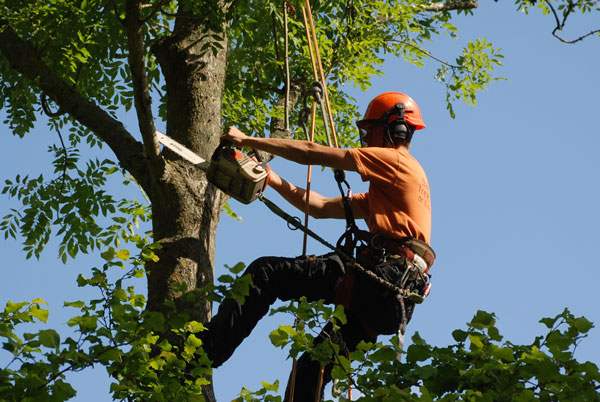 Increasing Significance Of Good Tree Surgeons