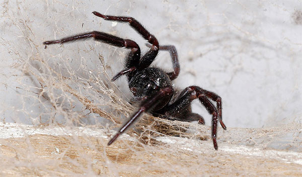 Are Spiders Considered Pests?