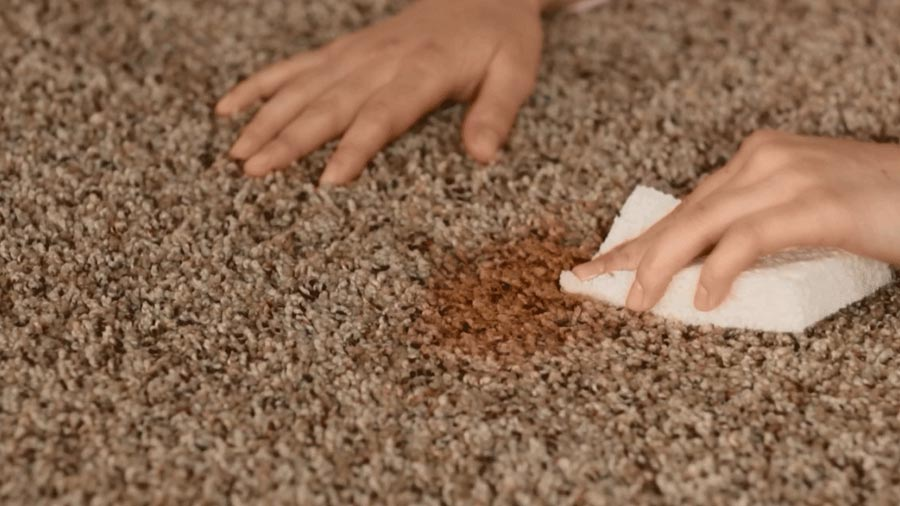 How To Maintain Your Rugs and Carpets?