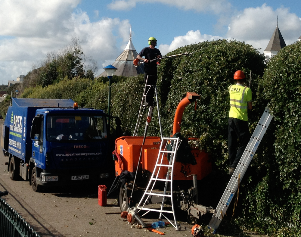 Benefits Of Getting Services Of Professional Tree Surgeons