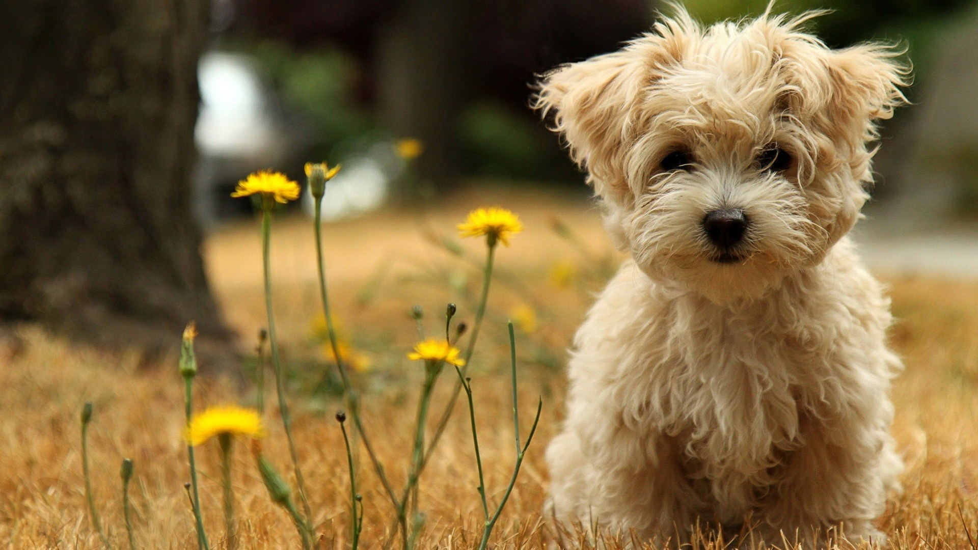 Should You Have Your Pet Buried Or Cremated